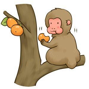 サルが柿を食う