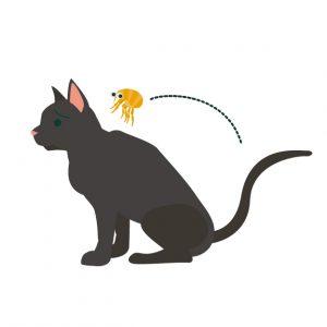猫にノミがつく