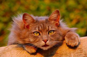 猫目単イエロー