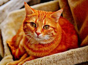猫目カッパー