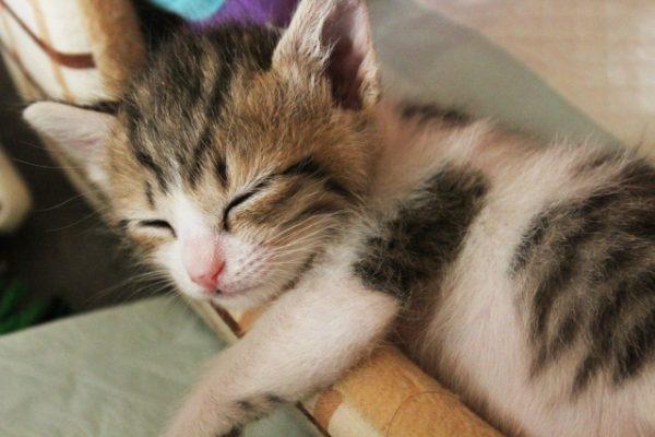 爆睡中の子猫