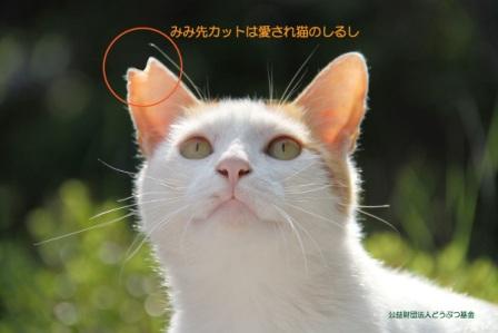 右耳カットオス