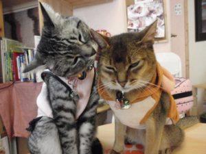 猫カフェみーこ