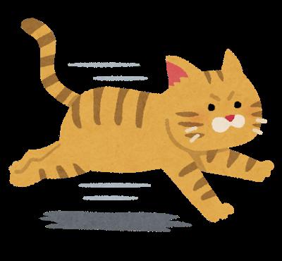 走って逃げる猫