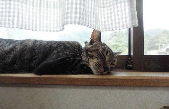 保護猫カフェまたたびあんブログより