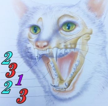 猫の歯並び