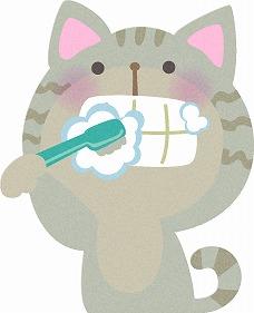 s-猫 歯磨き