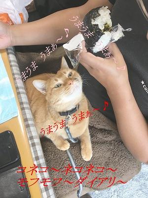 猫に人のご飯はNG