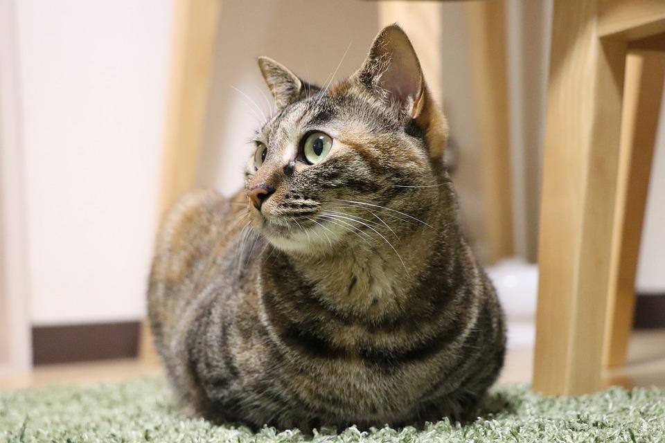 キジトラ猫2